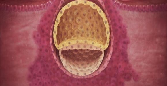 3. týden těhotenství